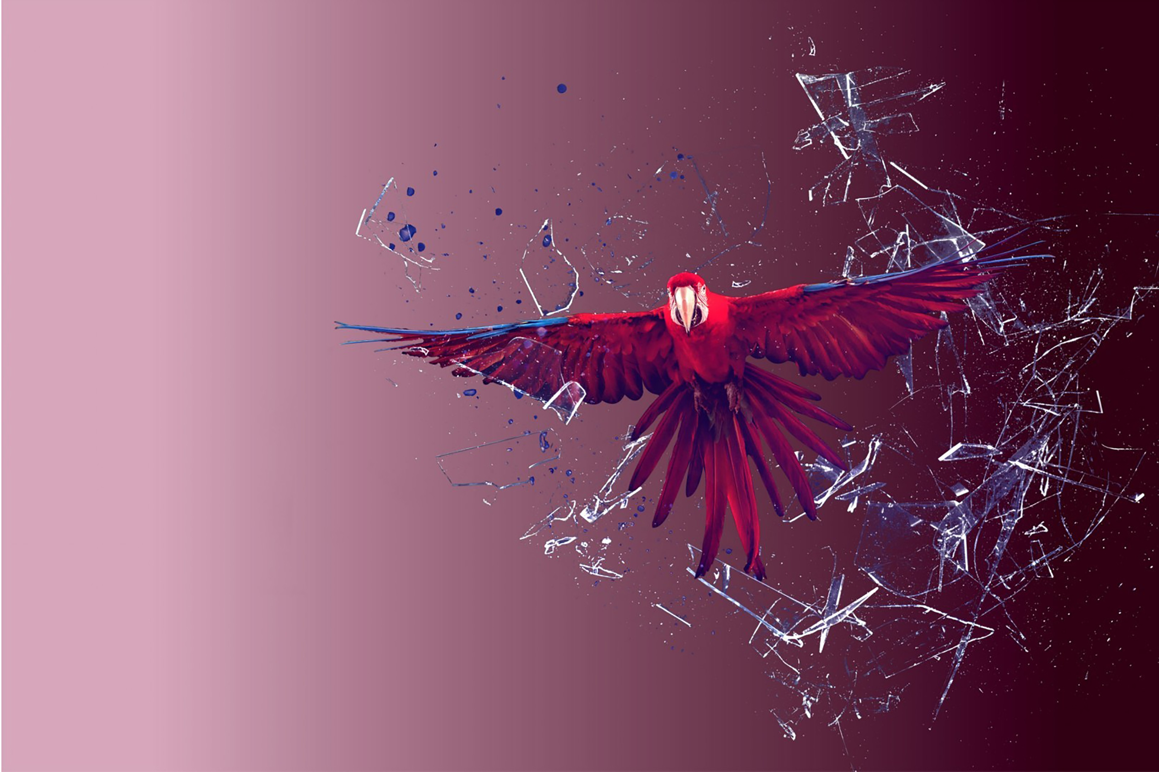 Unstoppable scarlet macaw