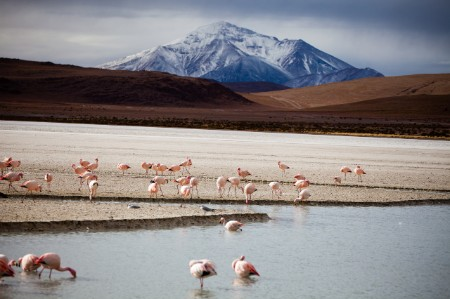 Atacama South America pink flamingos in riverbed mountain in background