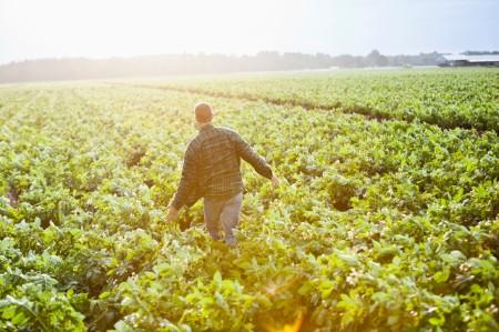 sunrise man working crop field