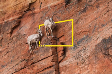Mountain goats on rock formation at zion national park