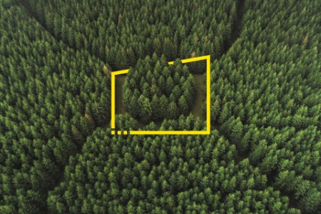 Aerial perspective of an unusual forest area