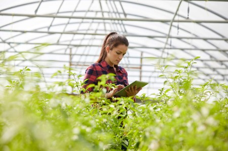 woman working tablet greenhouse