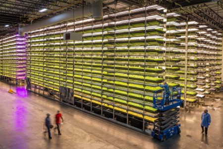 Workers inspecting growing beds of aerofarms