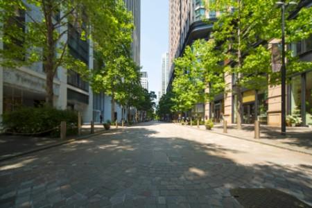tree-lines street