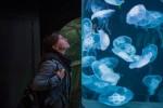 A woman admiring Jellyfish