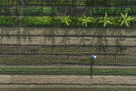 Aerial shot of wally fry walking in a field