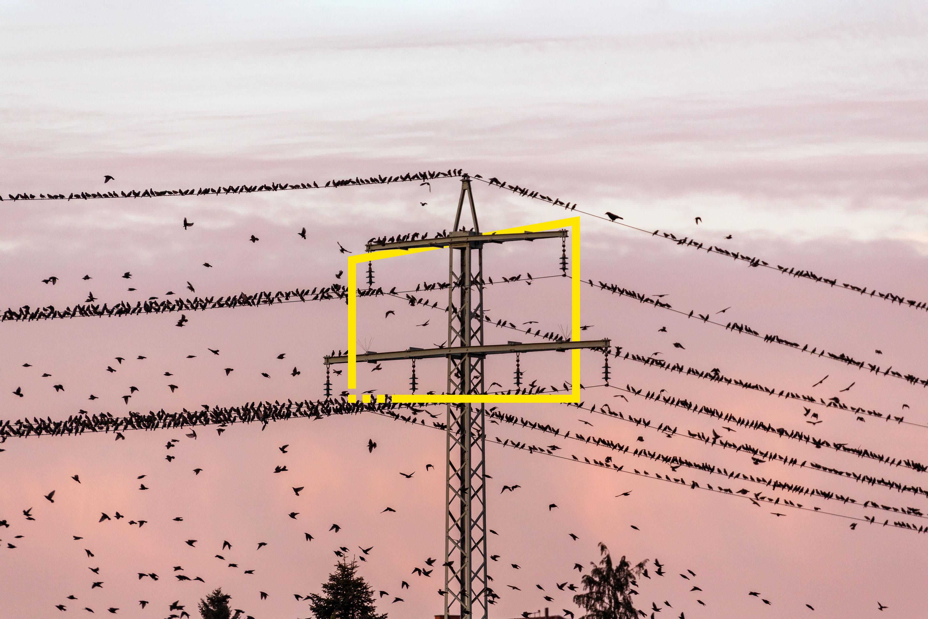 Flock o birds and power pylon at sunset