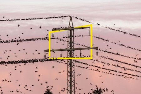 Flock of birds and power pylon at sunset