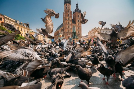 Pigeons flying in city