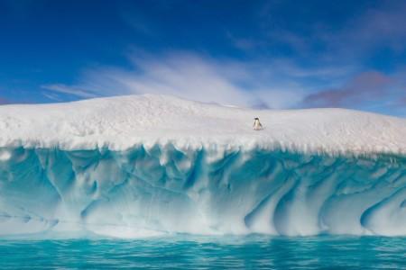 lone Adelie penguin top iceberg