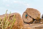 man boulderer in karnataka india metadata image