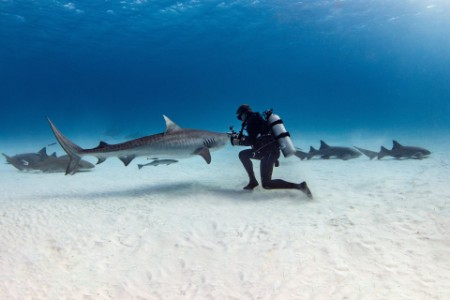 Scuba diver diving underwater with shark