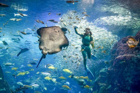 Woman scuba diving in sea with stingray