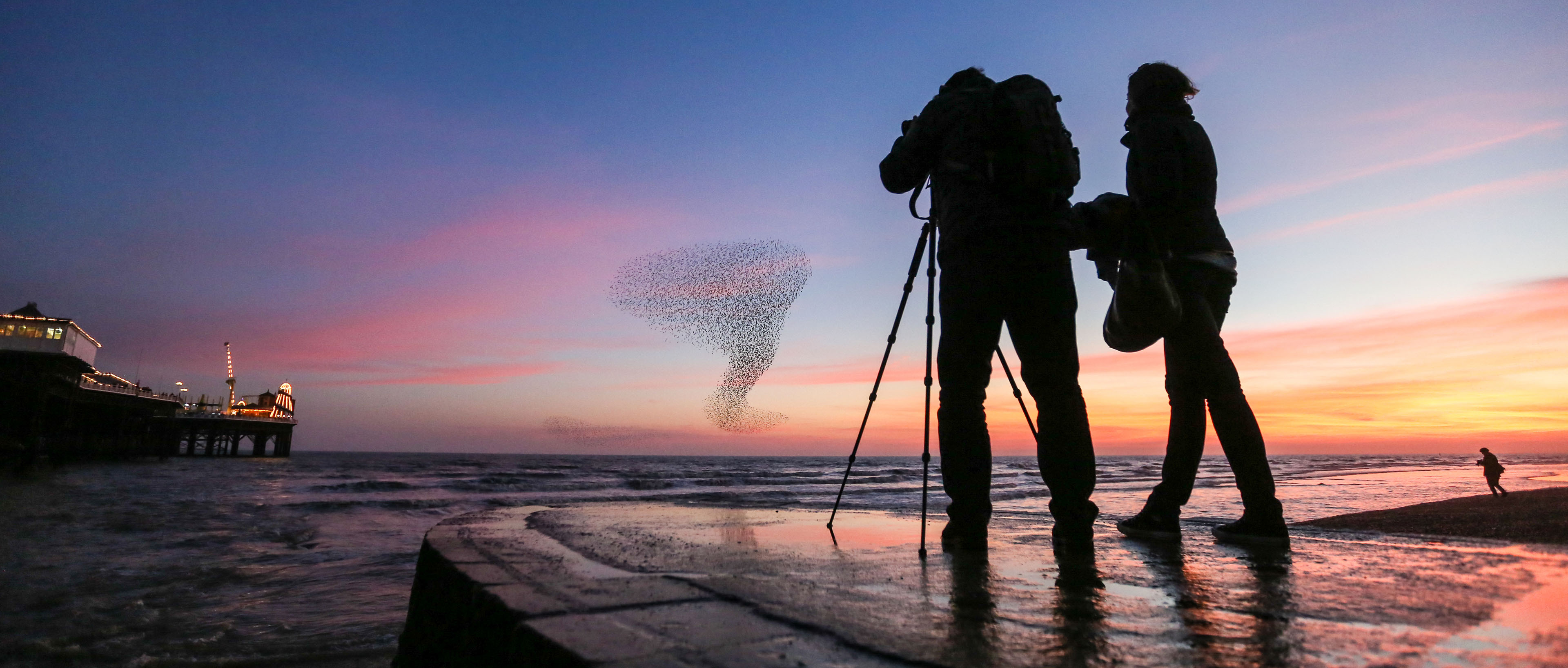 couple taking image of flock of starlings