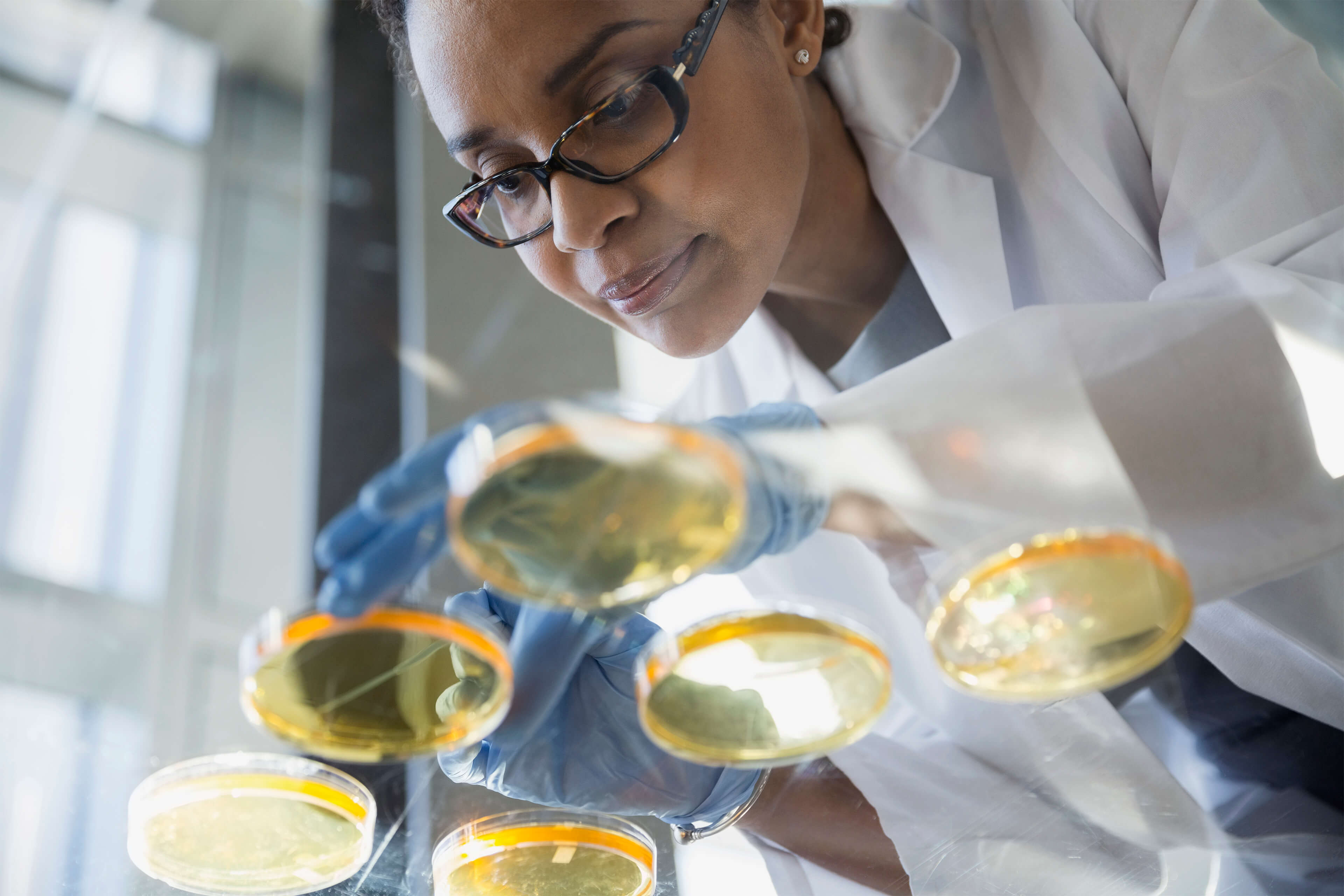 A female scientist examines yellow petri dishes on a glass table