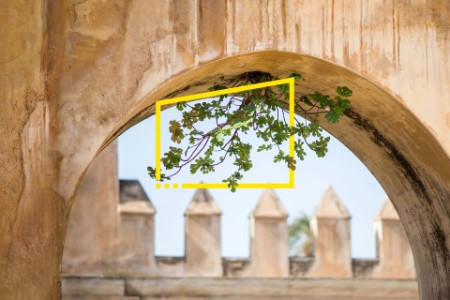 Plant growing out of archway at castle background