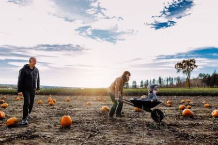 Family in pumpkin field