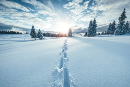 Footsteps in winter landscape