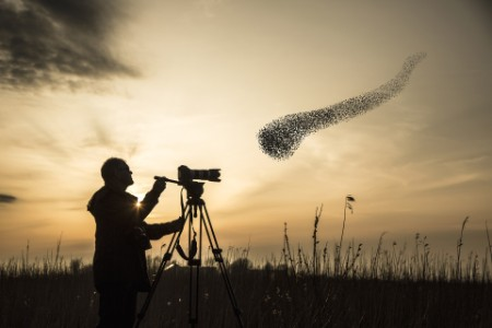 Man photographing a flock of migrating starlings