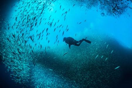 Aqua culture report fishing diving