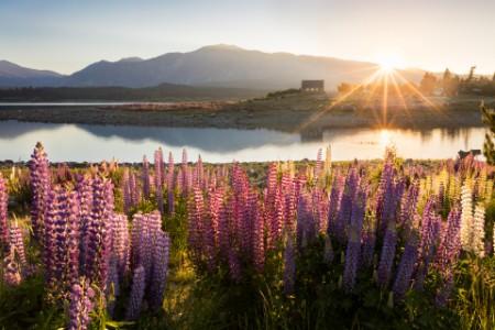 NZ landscape scene