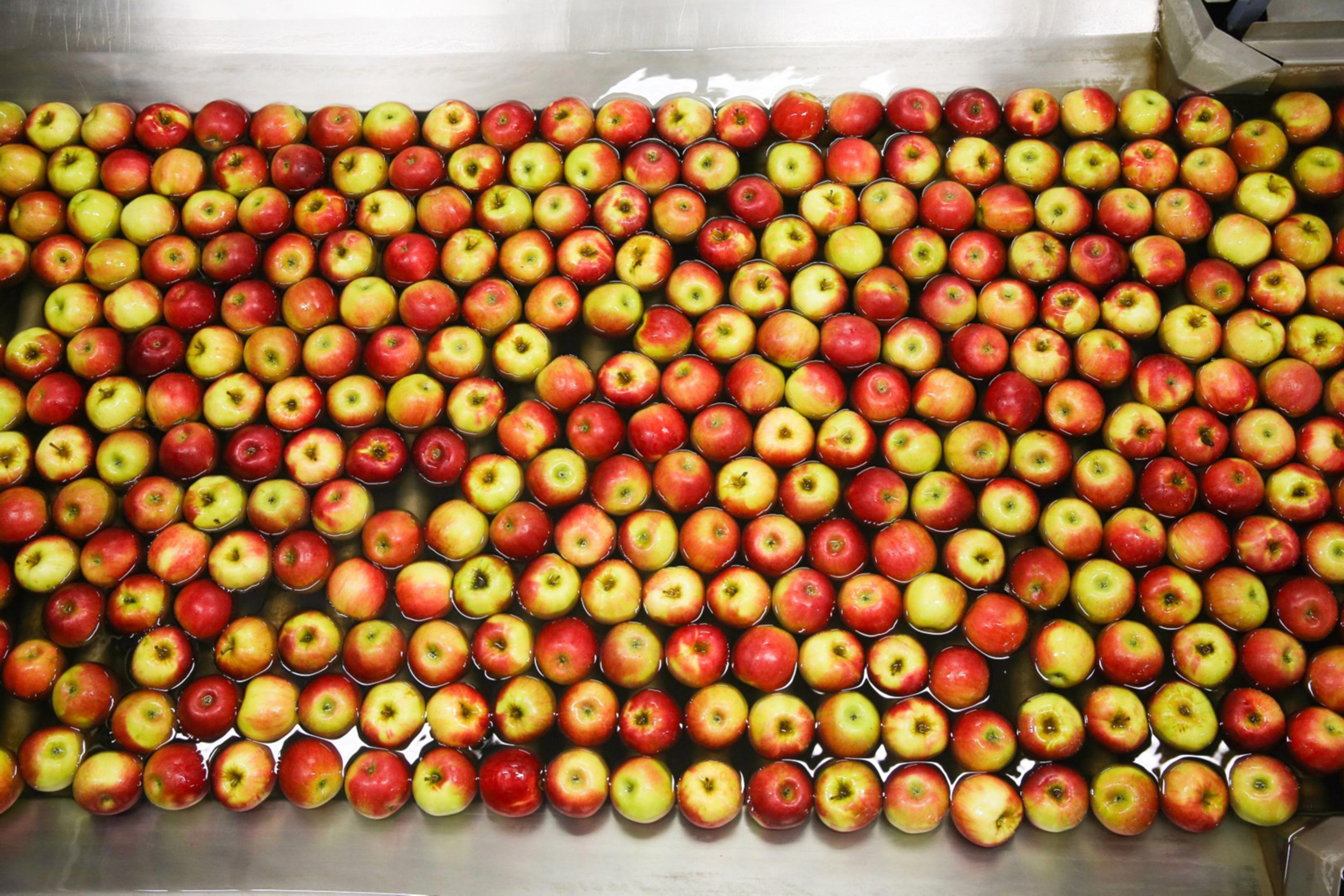 Evrosadova jabolka teknejo po vsem svetu
