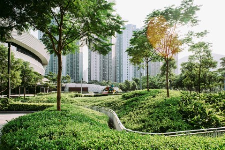 ey-trees-at-park-landscape