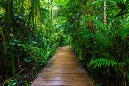 Wooden pathway in forest