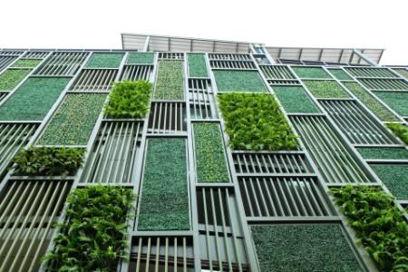 Green facade vertical garden