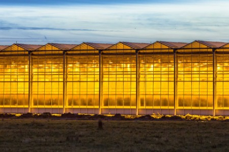 EY - Illuminated industrial greenhouse