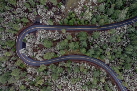 Curvy road forrest