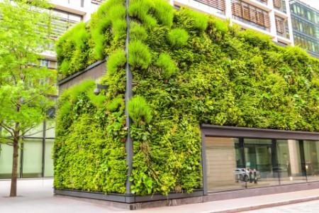 Green living facade of the building