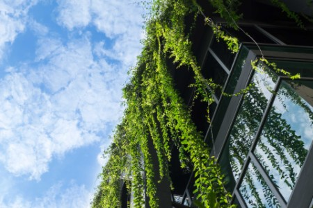 EY - Glass building house covered by green ivy