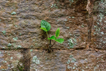 plant growing from rocks