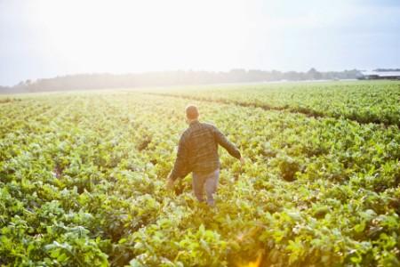 Man walking through field