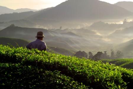Lo que debes saber sobre la nueva Ley del Sector Agrario