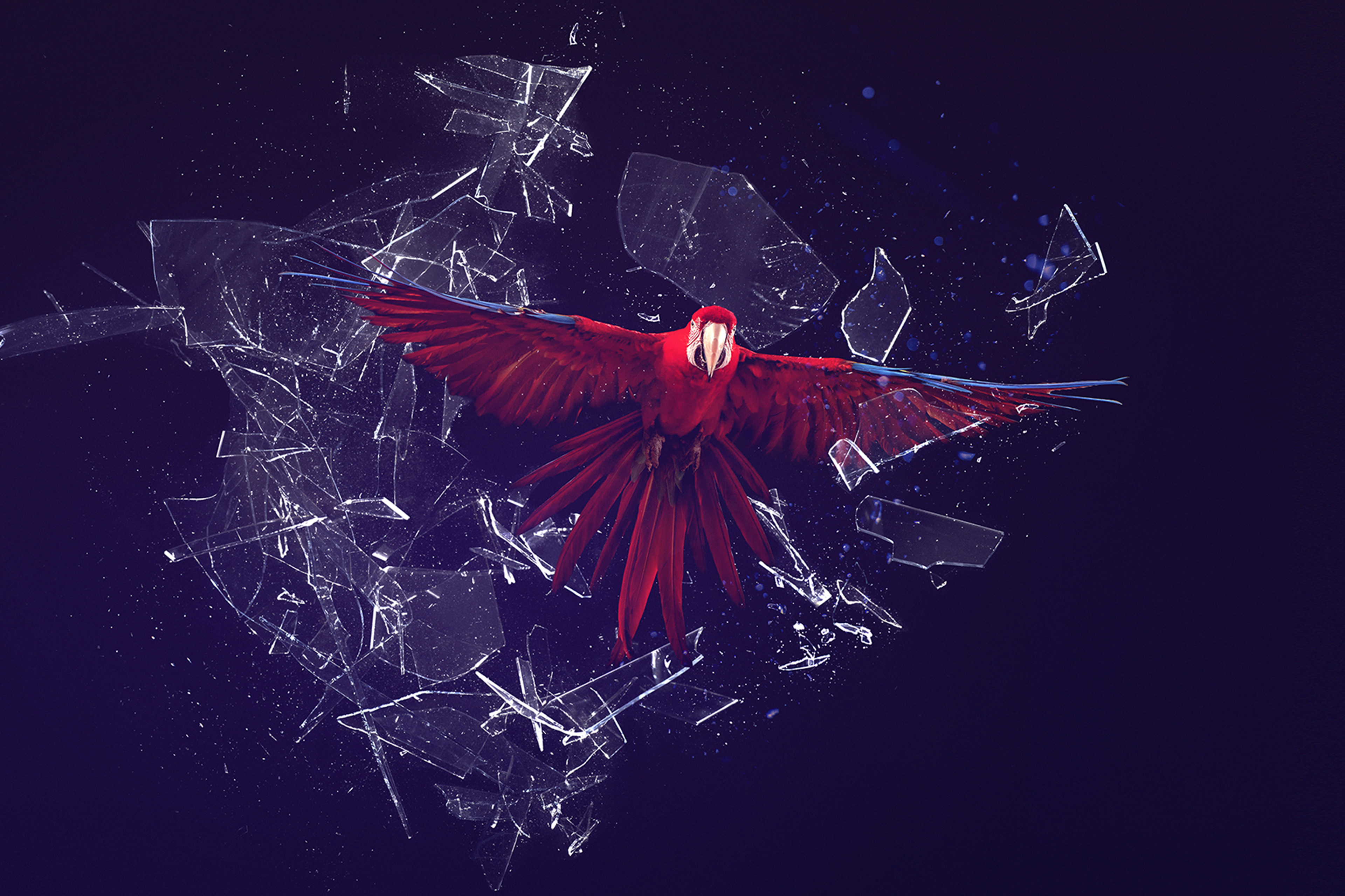 Red bird flying through glass