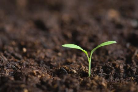 EY 7 kasvun ajuria