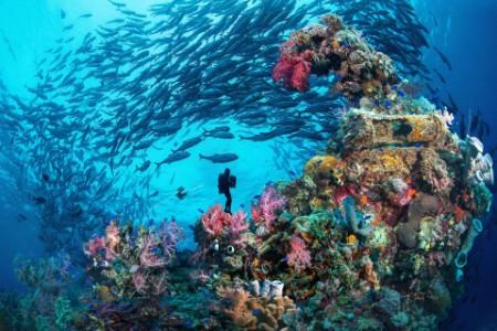Entreprise et biodiversité : l'urgence d'agir