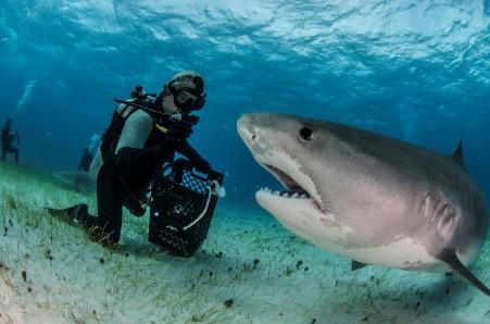 EY-kép-Búvár és cápa