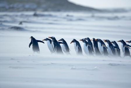 pingvinek-setalnak-a-hoban