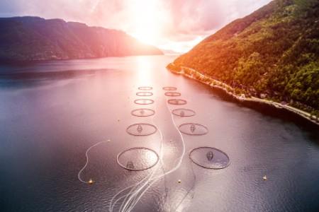 Fisk og oppdrett i solnedgang i norge