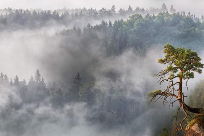 Ekologia coraz ważniejsza w strategiach firm – wyniki badania ING i EY Polska