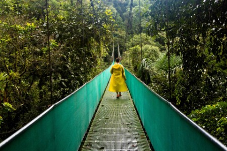 Tourist walking on the forest's foot-over bridge