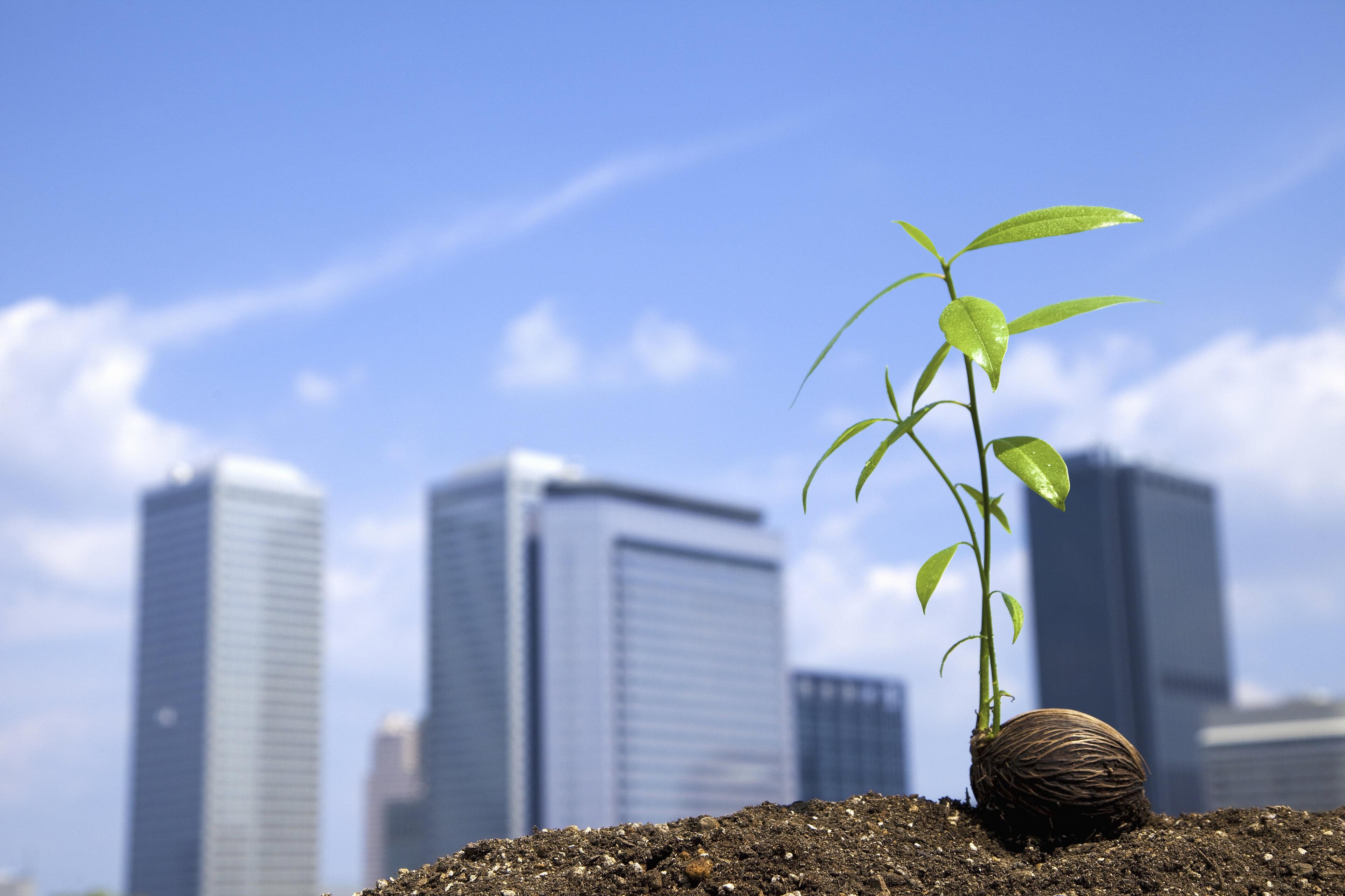 Услуги в области изменения климата и устойчивого развития