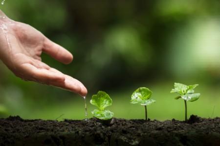 手取水 灌溉樹苗